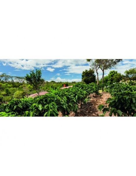 Kenya Karabe Peaberry Bourbon