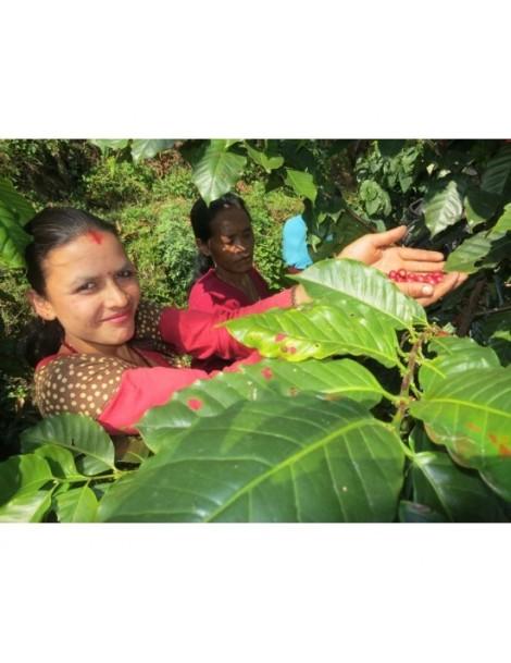 Congo Terroir Kivu