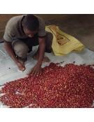 Etiopia Guji Orgánico
