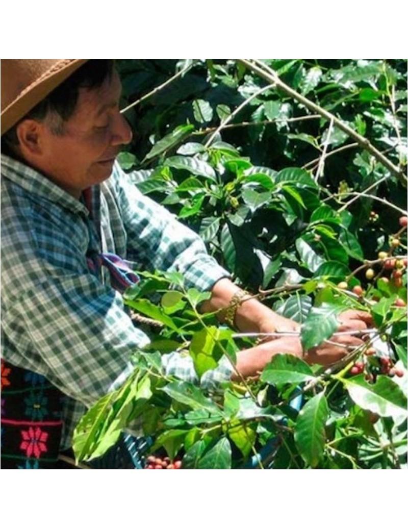 Guatemala San Juan Bourbon...